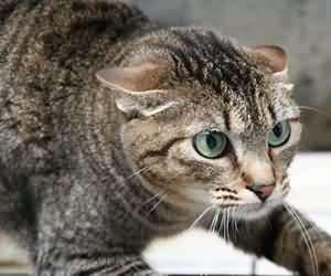 改善猫咪坏习惯 宠主应对及纠正